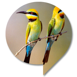 biodiv_uccelli