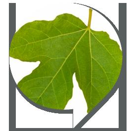 educaz_ambientale_sp